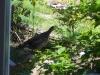 grouse-008